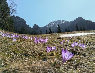 Czy można iść na wycieczkę w Tatry? Władze TPN wydały oświadczenie