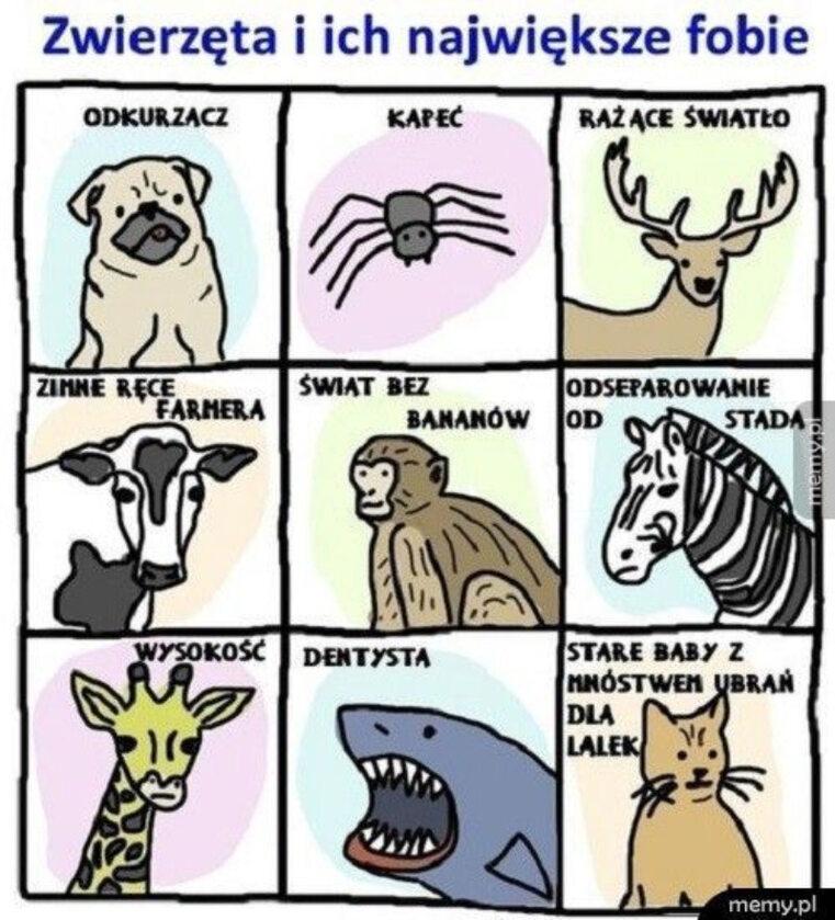 Memy ze zwierzętami w roli głównej