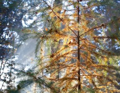 Najwyższy stopień zagrożenia pożarowego w polskich lasach