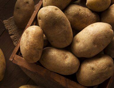 Groźna bakteria w ziemniakach. Ministerstwo Rolnictwa ostrzega