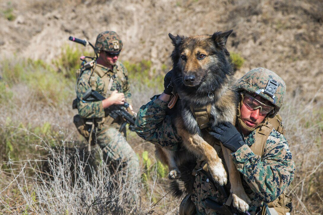 Psy w amerykańskiej armii