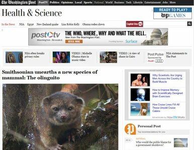 """Odkryto nowy gatunek zwierzęcia. To """"pluszowy"""" olinguito"""