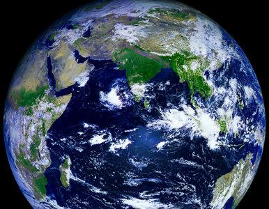 """Naukowcy odkryli nowy kontynent. """"Na Zealandii mogło kiedyś kwitnąć życie"""""""
