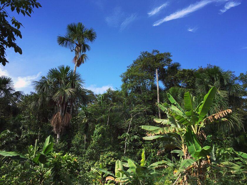 Dżungla (zdj. ilustracyjne)