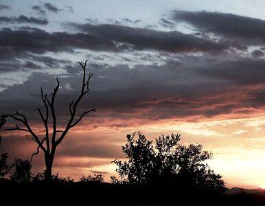 Ślady życia z kosmosu znalezione w Afryce?