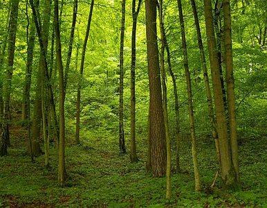 Policjanci szukali w lesie rodzącej kobiety