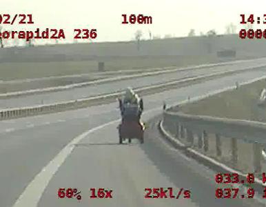 Kobieta na wózku inwalidzkim jechała po drodze ekspresowej S5. Policja...