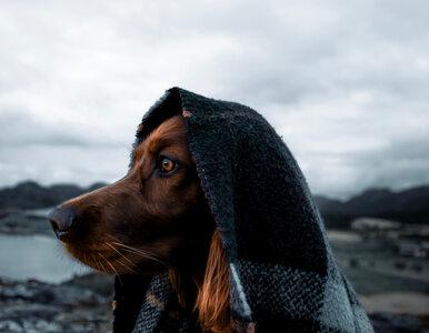 Ten pies to prawdziwy łowca przygód. Właściciel publikuje niezwykłe...