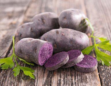 Zaskakujące korzyści zdrowotne fioletowych ziemniaków