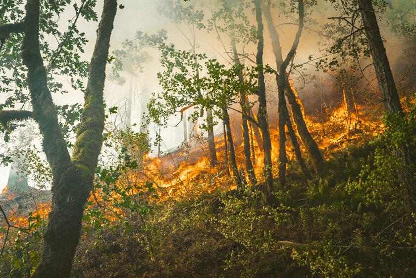 Pożar lasu, zdjęcie ilustracyjne