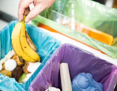 NIK: Segregacja odpadów nie działa, chociaż system jest prawidłowy