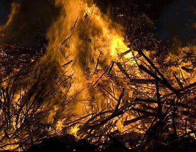 Spłonęło 50 ha lasu, pól i traw