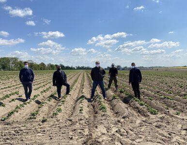 Zrównoważone rolnictwo w uprawie ziemniaków. Jak to robi PepsiCo?