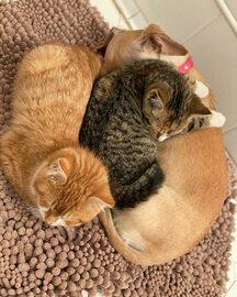 Wzruszająca przyjaźń psa i porzuconych kociaków