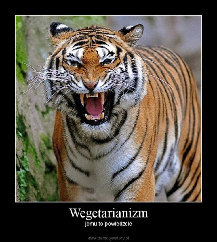 Memy związane z wegetarianizmem