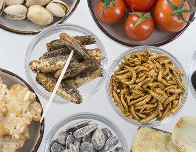 Korzyści płynące z... jedzenia owadów. Są doskonałym źródłem białka i...