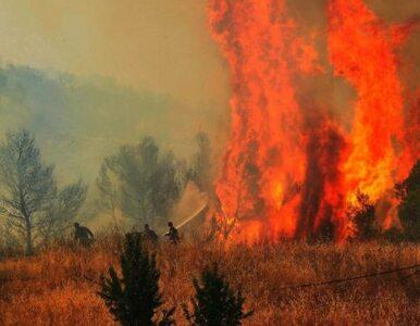 Grecja płonie. Ogień zbliża się do kolejnych wiosek