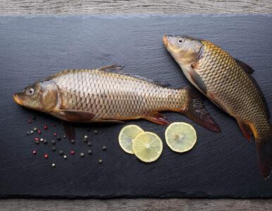 Które z ryb są zdrowe, a które pełne zanieczyszczeń? Czy warto jeść...