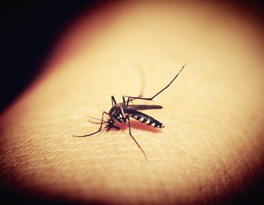 Kogo najczęściej gryzą komary i co ma z tym wspólnego nasza grupa krwi?