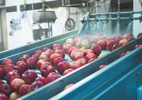 Jak rozpoznać żywność wysokiej jakości?