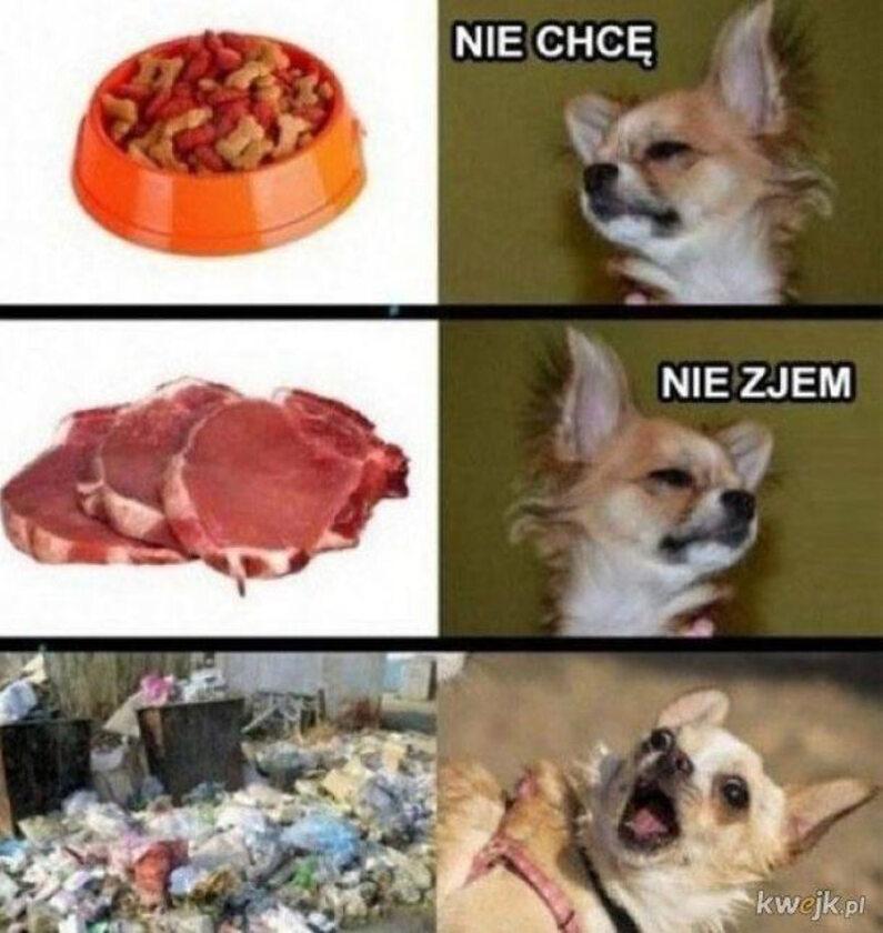 Memy z psem w roli głównej
