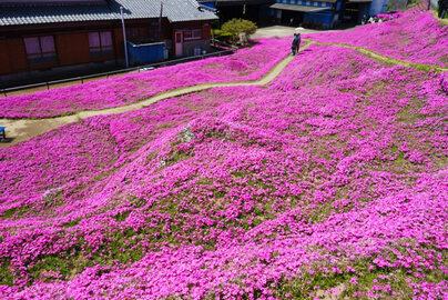 Ogród pana Kuroki