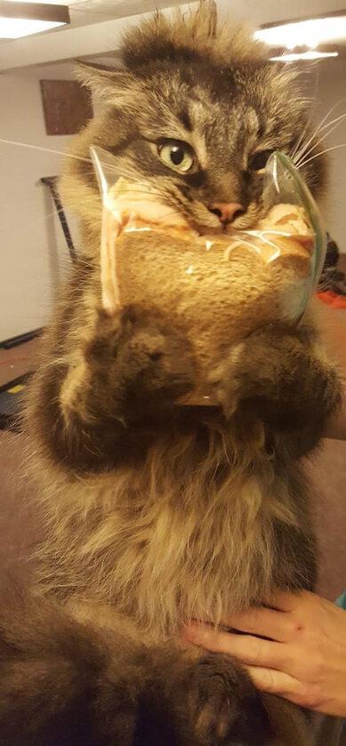 Nie dla kota drugie śniadanie