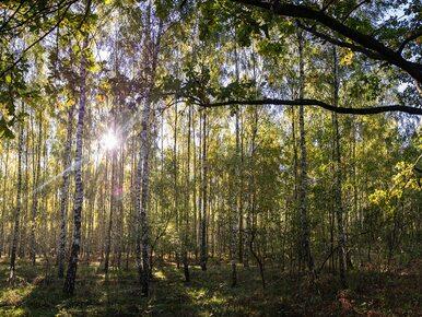 Ministerstwo Środowiska sadzi drzewa z okazji Święta Lasu. Szyszko: Lasy...