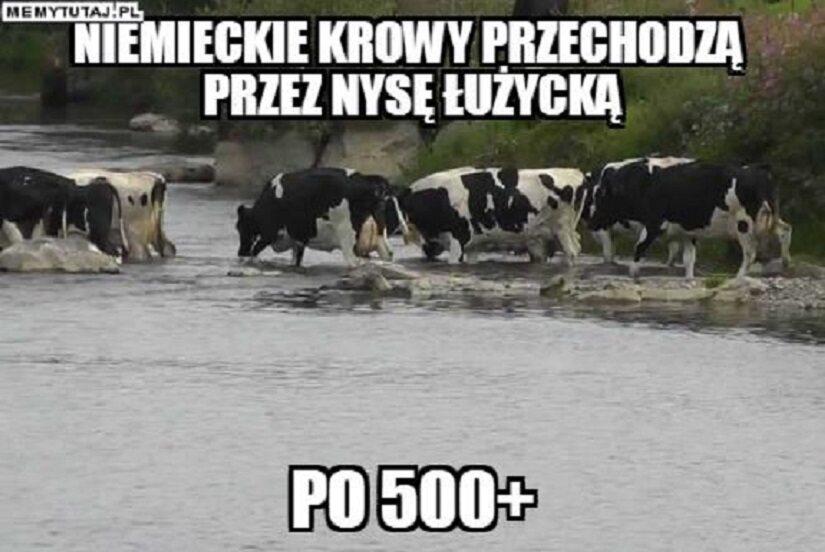 """Memy po zapowiedziach o programie """"500 plus dla krów"""""""