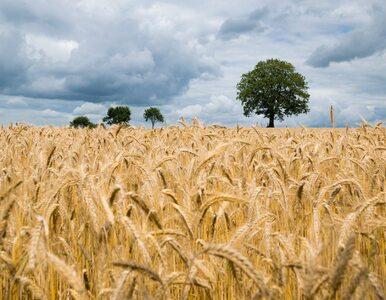 Od nasion do chleba