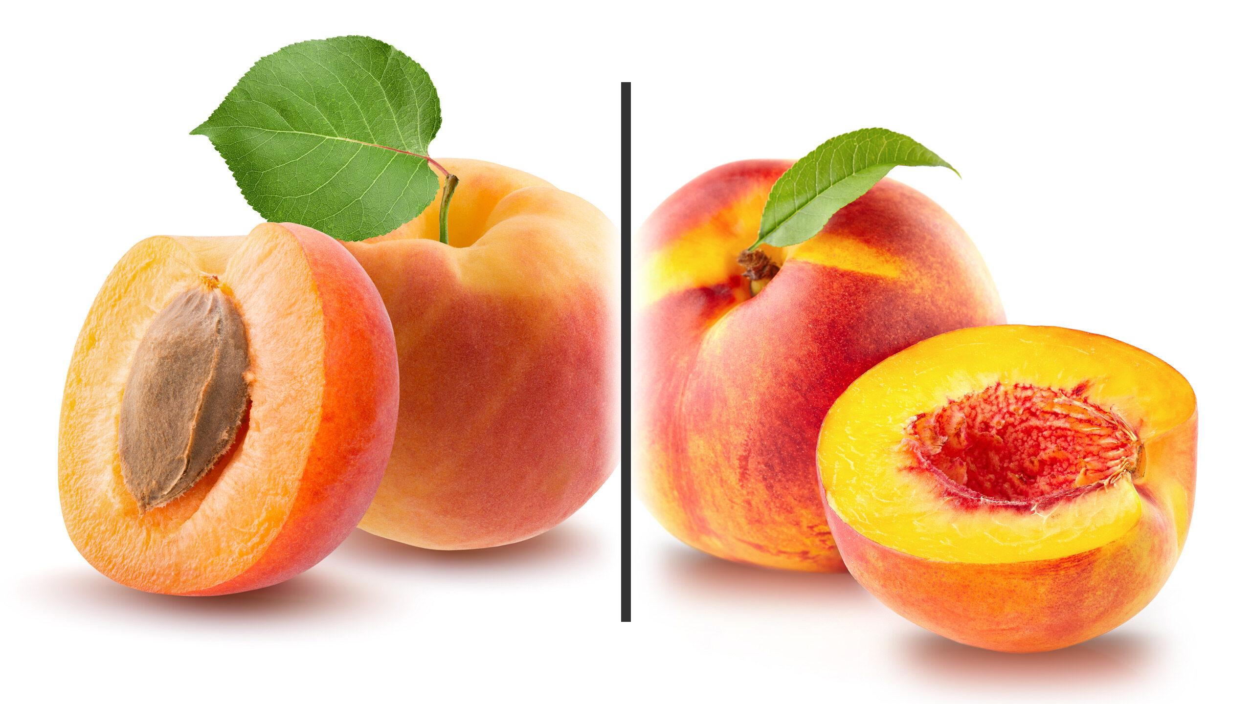 Morela kontra nektarynka - ilustracja