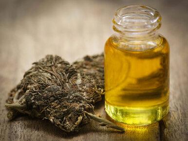 """Sejm mówi """"tak"""" medycznej marihuanie. Posłowie przyjęli ustawę"""