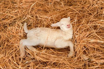 Słodkich snów! Śpiące zwierzaki, które podbiją twoje serce