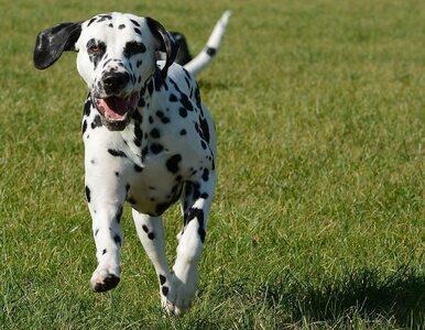 Bieganie z psem? To bardzo zdrowe dla ciebie i pupila!