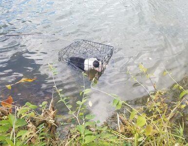 Ktoś zamknął psa w klatce i wrzucił do jeziora. Zwierzę uratował nauczyciel