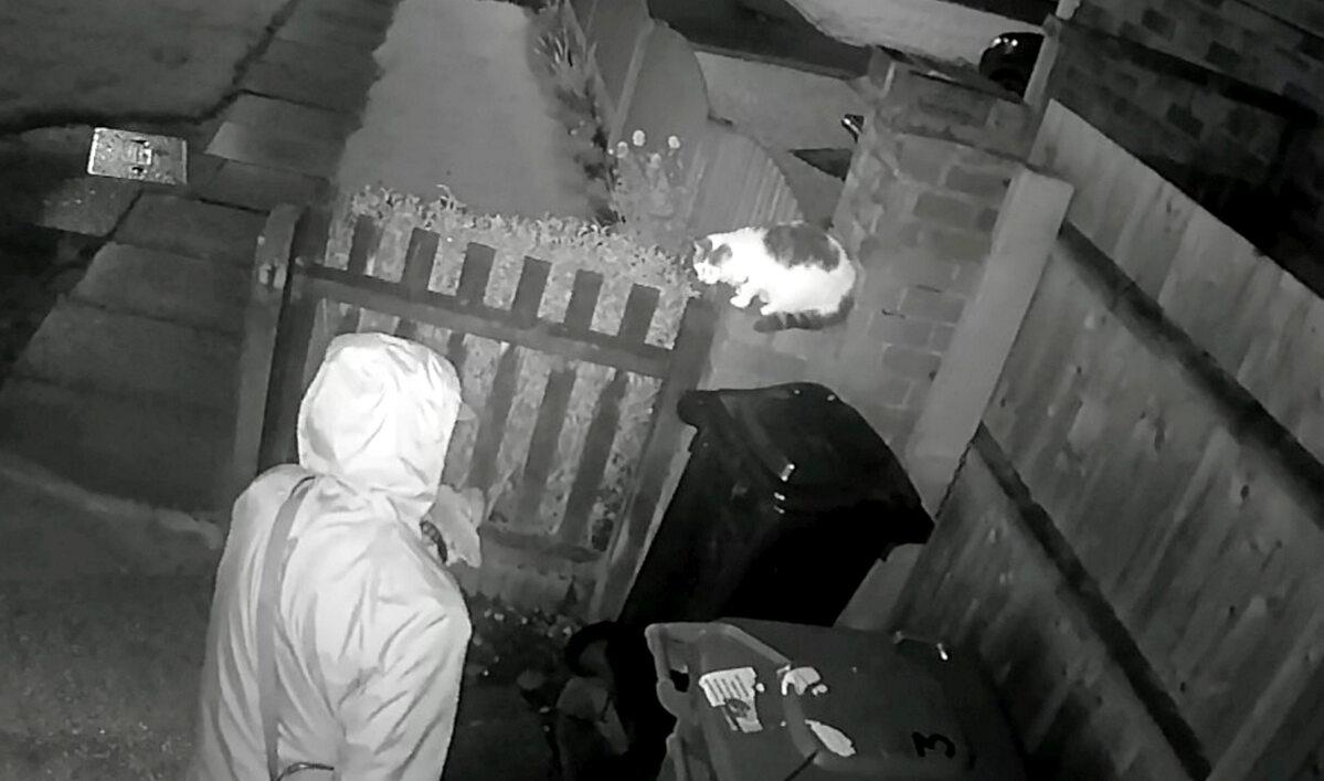 Mężczyzna zachęcał psa, aby rozszarpał kota. Nagranie trafiło do sieci
