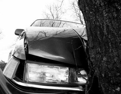 Uderzyli w drzewo - trzy młode osoby nie żyją. Policja nie wie dlaczego