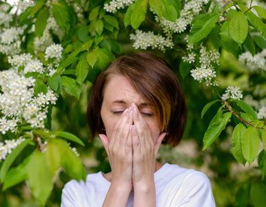 Co pyli w czerwcu? Lista najpopularniejszych alergenów i kalendarz...