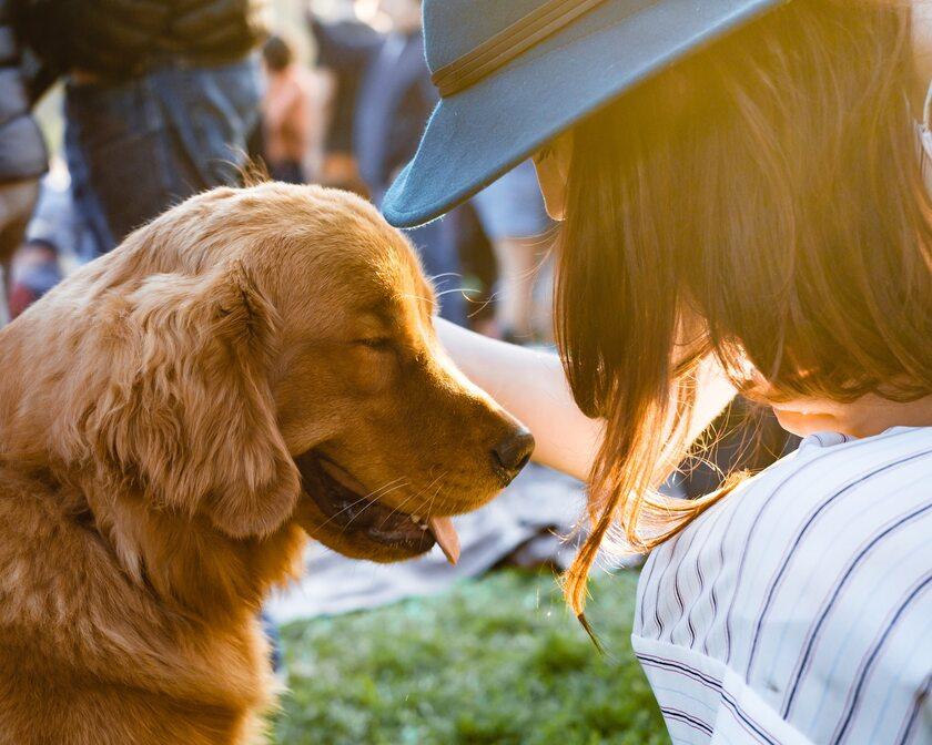 Pies, zdjęcie ilustracyjne