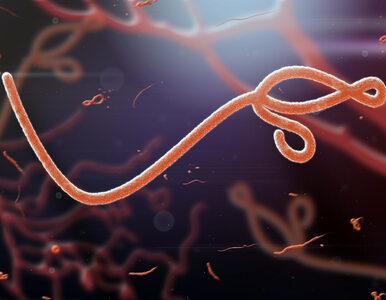 Ebola znowu atakuje. Potwierdzono dwa przypadki zarażenia