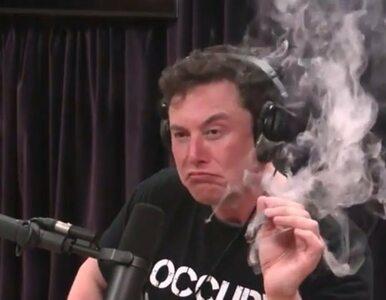 Lubicie Elona Muska? Przypomnijmy jego największe dziwactwa