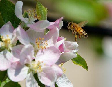 Segregacja się opłaca! Dzięki niej pszczoły dostały nowy dom