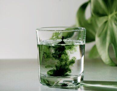 Chlorofil – składnik roślin, który przynosi korzyści ludzkiemu organizmowi
