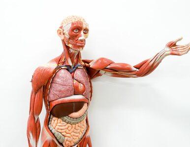 Ile jest organów w ciele człowieka? To zależy m. in. od zębów i kości