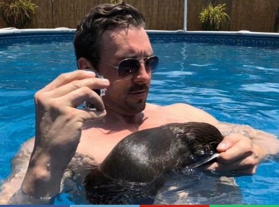 Turysta pływający z wydrami