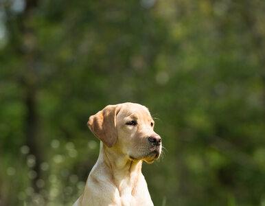 Canicross, czyli bieganie z psem. Jak ćwiczyć, żeby nie doznać urazu?