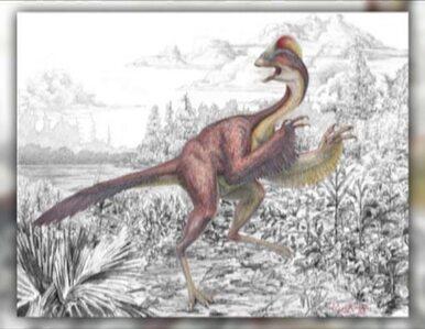 Naukowcy odkryli nowego dinozaura. Przypomina... ptaka