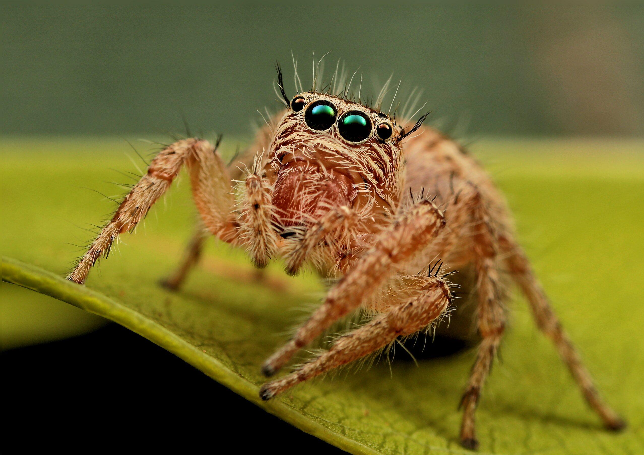 Kto to powiedział?: Czemu pająki? Dlaczego to nie mogą być motyle?