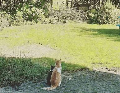 Domowy kot przyprowadził bezdomnego sierściucha. Teraz są nierozłącznymi...