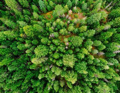 Jak amerykańskie lasy reagują na zmiany klimatu? Najnowsze wyniki badań